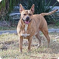 Adopt A Pet :: Leona - Minneola, FL