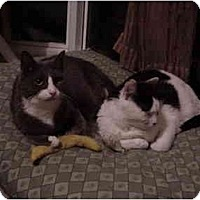 Adopt A Pet :: Miana & Campbell - Chesapeake, VA