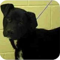 Adopt A Pet :: Morgan - Seattle, WA