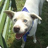 Adopt A Pet :: Glacier - Crescent City, CA