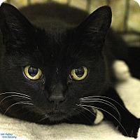 Adopt A Pet :: Addie - Mission, BC