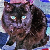 Adopt A Pet :: Babe - N. Billerica, MA