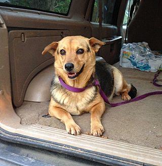 Beagle/Shepherd (Unknown Type) Mix Dog for adoption in Acworth, Georgia - Krissy