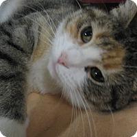 Adopt A Pet :: Abigail - Colmar, PA