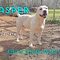 Adopt A Pet :: Jasper - Blakely, GA