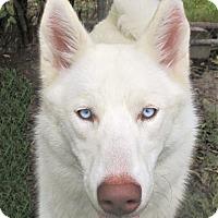 Adopt A Pet :: Spirit - Godley, TX