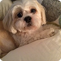 Adopt A Pet :: Mandi - Miami, FL