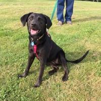 Adopt A Pet :: Dixie - Salem, OH