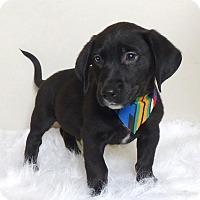 Adopt A Pet :: Bongo - Kerrville, TX