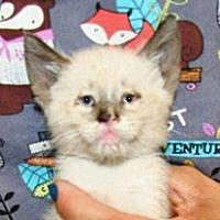 Adopt A Pet :: Tiny - Wildomar, CA