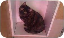 Domestic Shorthair Cat for adoption in Madison, Wisconsin - Penny Lane