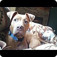 Adopt A Pet :: Gunner - Woodlawn, TN