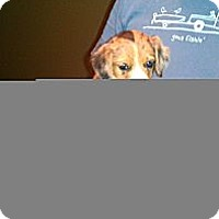 Adopt A Pet :: Andy - Conway, AR