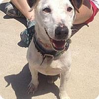 Adopt A Pet :: Emerson in Houston - Houston, TX