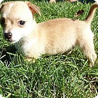 Adopt A Pet :: Nemo - Burr Ridge, IL