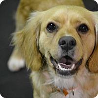 Adopt A Pet :: Winston - Redondo Beach, CA