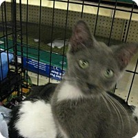 Adopt A Pet :: Sherman - Logan, UT