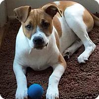 Adopt A Pet :: MAYBELLINE - Pompton Lakes, NJ