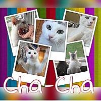 Adopt A Pet :: Cha-Cha (FCID# 7/21/16 - 7 Foster) - Greenville, DE