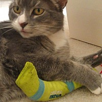 Adopt A Pet :: Bailey* - Trexlertown, PA