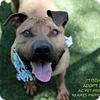 Adopt A Pet :: Titch - Kansas City, MO