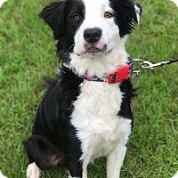 Adopt A Pet :: Jupiter - Fort Valley, GA