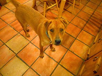 Shar Pei/Chow Chow Mix Dog for adoption in Tijeras, New Mexico - Monty