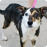 Adopt A Pet :: Gina - Minneapolis, MN