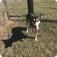 Adopt A Pet :: #33 - Seguin, TX