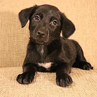 Adopt A Pet :: Nova - Hagerstown, MD