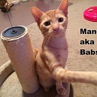 Adopt A Pet :: Mandy aka Babs - Austin, TX