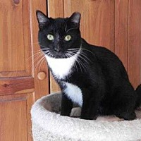 Adopt A Pet :: Sebastian - Fayetteville, TN