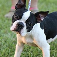 Adopt A Pet :: COURTESU POST - Bunny - Picayune, MS