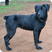 Adopt A Pet :: Zoe - Athens, GA