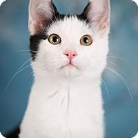 Adopt A Pet :: Phillip - Eagan, MN