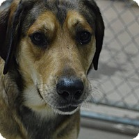 Adopt A Pet :: Squirt - Cedar Rapids, IA