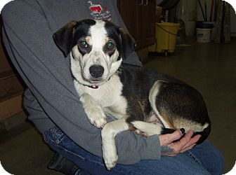 Terrier (Unknown Type, Medium) Mix Dog for adoption in Medford, Wisconsin - LILLY