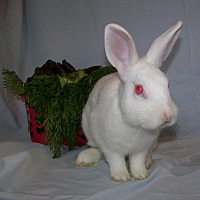 Adopt A Pet :: Denali - Alexandria, VA