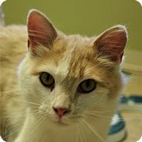 Adopt A Pet :: Nemo - Hastings, NE