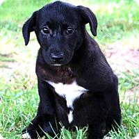 Adopt A Pet :: Tooter ~ meet me! - Glastonbury, CT