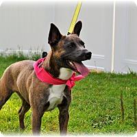 Adopt A Pet :: Nala - Southern Pines, NC