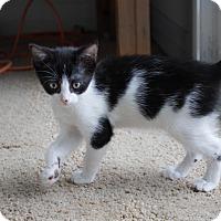 Adopt A Pet :: Annie - Battle Creek, MI