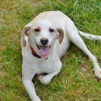 Adopt A Pet :: Ella - Marshall, NC