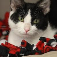 Adopt A Pet :: Satsuki - Madison, WI