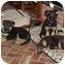 Photo 4 - German Shepherd Dog Mix Puppy for adoption in Los Angeles, California - Graham von Wiesbaden