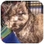 Photo 3 - Domestic Shorthair Kitten for adoption in Colmar, Pennsylvania - Crisbelle