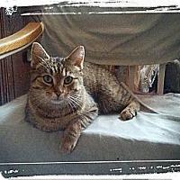 Adopt A Pet :: Princess D - london, ON