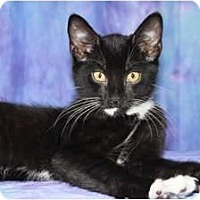 Adopt A Pet :: Selim - Norwich, NY