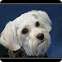 Adopt A Pet :: Maddie - Fort Braff, CA