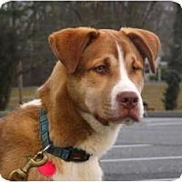 Adopt A Pet :: Precious Baby Drake - Baltimore, MD